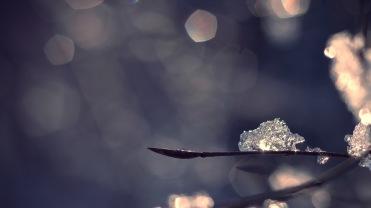ice-snowbokeh